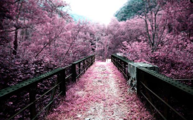 Sakura-Garden